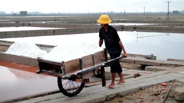 sea salt harvesting with labors